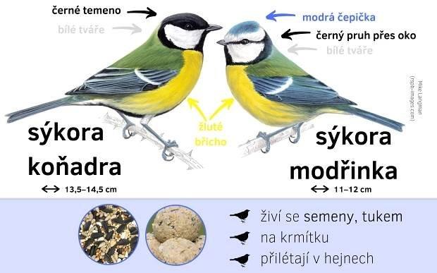 Určování ptáků - Ptačí hodinka