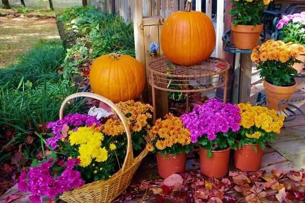 V říjnu se na zahradě zahřejete aneb co na ní udělat, aby na jaře byla znovu krásná - HomeInCube